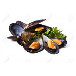 Chilean Blue Mussel